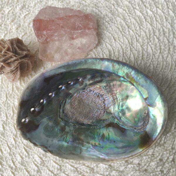 Abalone schelp binnenkant