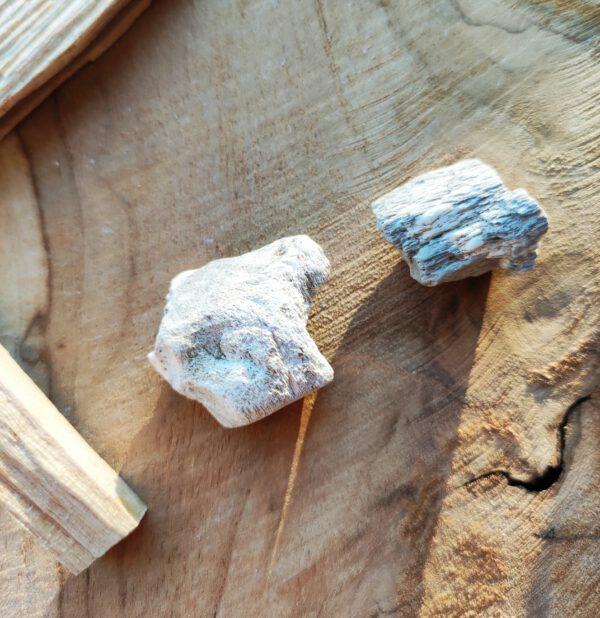 Versteend hout klein 2