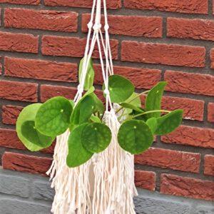Plantenhanger met franjes boho